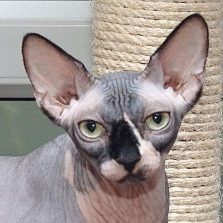 Kid Merino Lace Scarf - cat's paw pattern - free knit lace