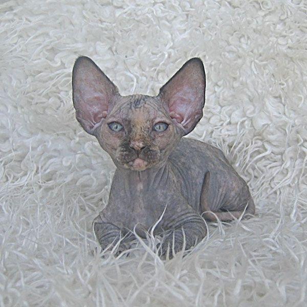 Египетские коты картинки - 07